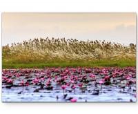 Rote Wasserlilien - Leinwandbild