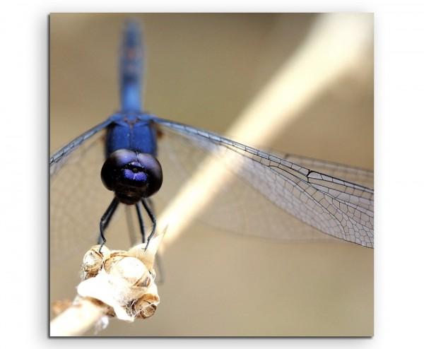 Naturfotografie – Libelle auf Zweig auf Leinwand