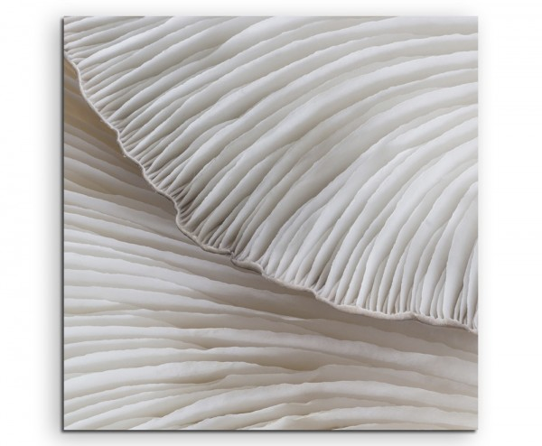 Naturfotografie – Sajor Caju Pilze auf Leinwand exklusives Wandbild moderne Fotografie für ihre Wand