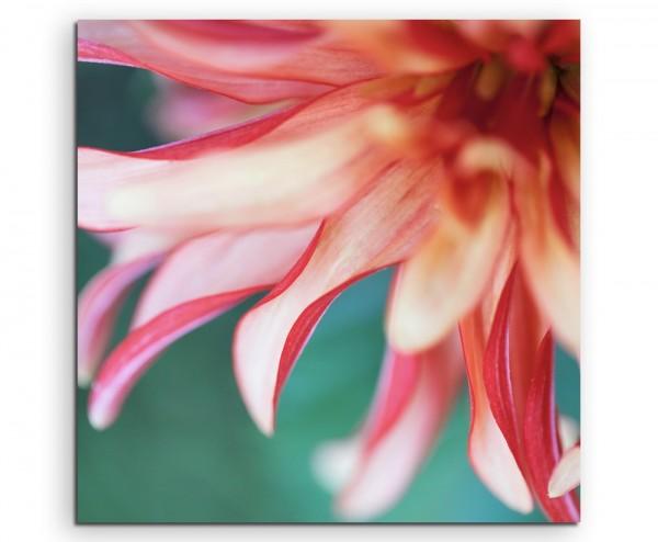 Naturfotografie – Beschnittene rote Blüte auf Leinwand