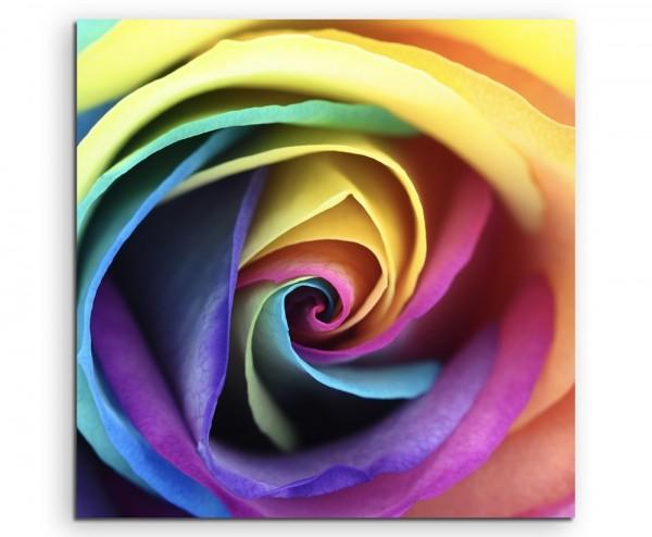 Naturfotografie – Rose in Regenbogenfarben auf Leinwand