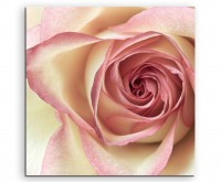 Naturfotografie – Cremefarbene Rose auf Leinwand