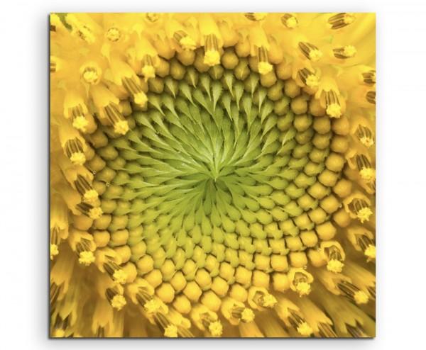 Naturfotografie – Nahaufnahme einer Sonnenblumen auf Leinwand