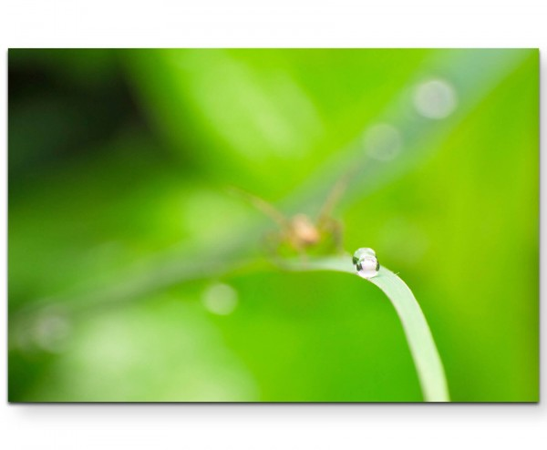 Wassertropfen + Hintergrund in Grasgrün - Leinwandbild