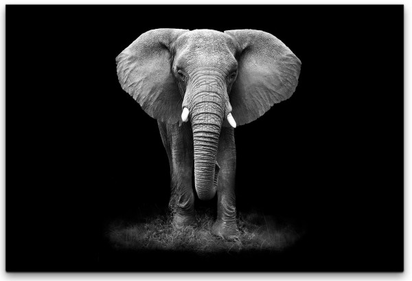 Elefanten Portrait Wandbild in verschiedenen Größen