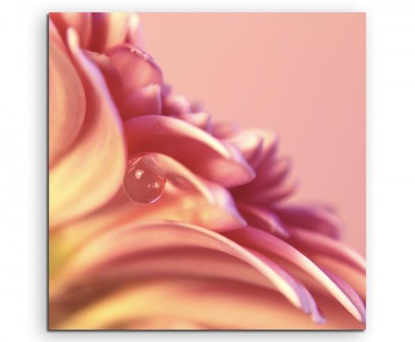 Naturfotografie – Detailaufnahme Wassertropfen auf pinker blumen auf Leinwand