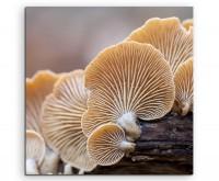 Naturfotografie – Austernpilze auf Leinwand exklusives Wandbild moderne Fotografie für ihre Wand in