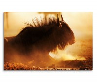 120x80cm Wandbild Südafrika Kalahari Wüste Gnu Sand Dunst