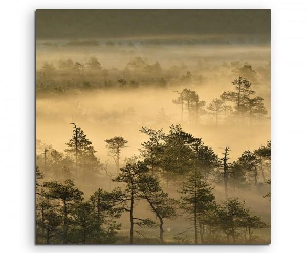Landschaftsfotografie – Goldener Waldmorgen bei Sonnenaufgang auf Leinwand