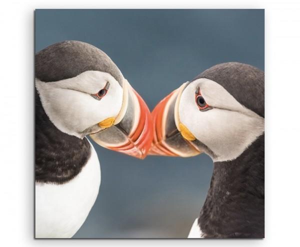 Tierfotografie – Romantische Papageitaucher auf Island auf Leinwand exklusives Wandbild moderne Foto