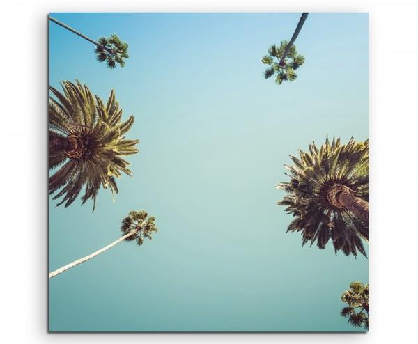 Naturfotografie – Palmen vor blauem Himmen, Los Angeles, USA auf Leinwand