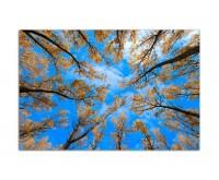 120x80cm Bäume Blätter Himmel Herbst