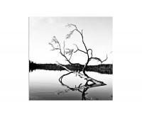 80x80cm Finnland Baum Geäst See