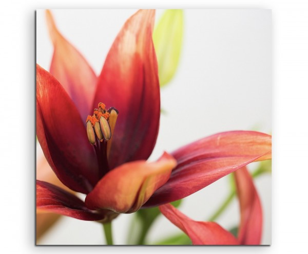 Naturfotografie – Rot orange Orchidee auf Leinwand