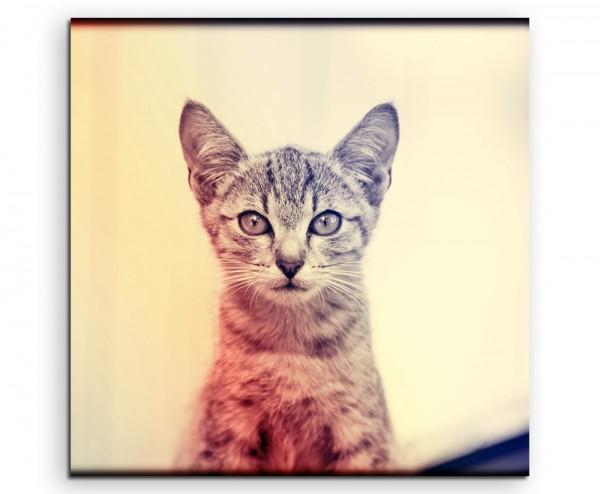 Tierfotografie – Portrait einer jungen Katze auf Leinwand