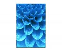 120x80cm Pflanze Blütenblätter Wassertropfen blau