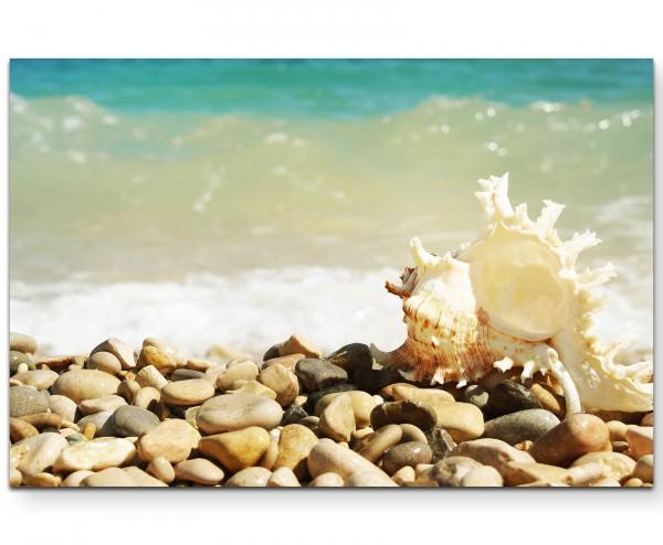 Steine am Meer – Muschel - Leinwandbild