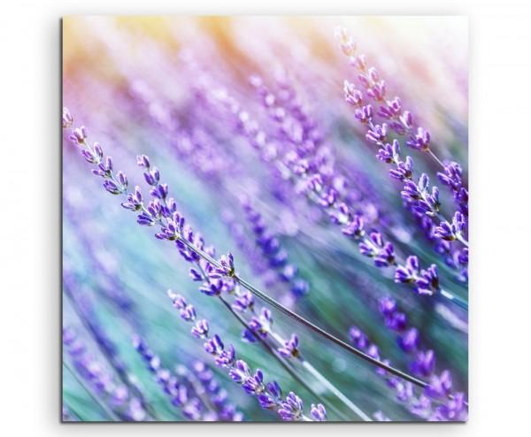 Naturfotografie – Lavendelblüten in der Sonne auf Leinwand