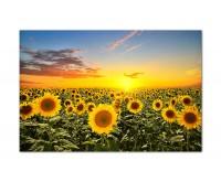 120x80cm Sonnenblumen Sonnenuntergang Himmel