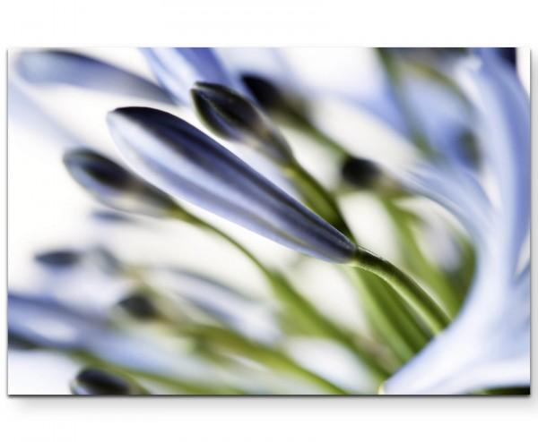 Blaue Blüten in Nahaufnahme - Leinwandbild