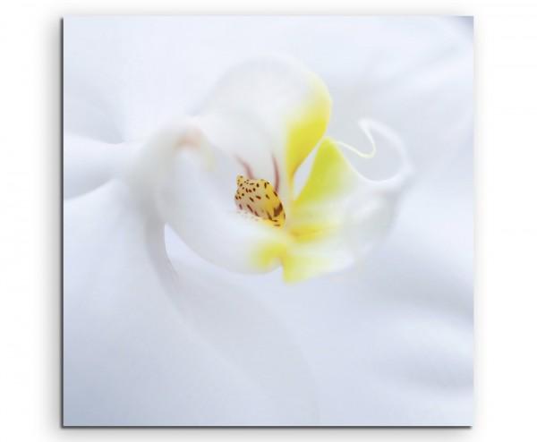 Naturfotografie – Weiße Orchidee auf Leinwand exklusives Wandbild moderne Fotografie für ihre Wand i