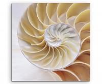Naturfotografie – Spiralförmige Muschel mit Fibonacci Symmetrie auf Leinwand