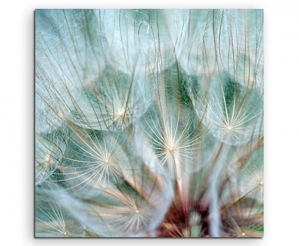 Naturfotografie – Pusteblumen im Detail auf Leinwand