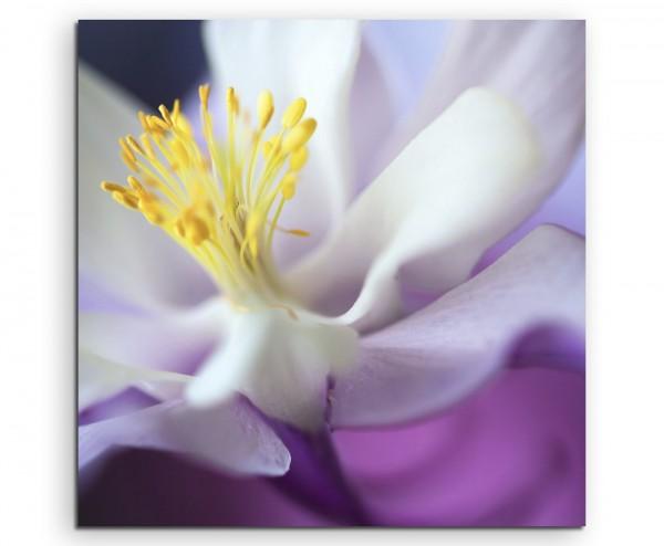 Naturfotografie – Weiße Orchidee auf lila Hintergrund auf Leinwand exklusives Wandbild moderne Fotog