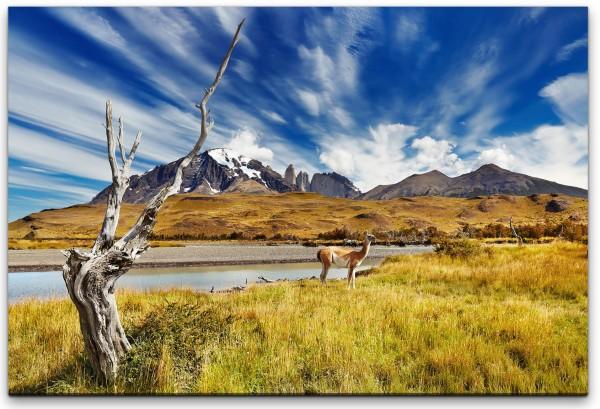 Tiere in Chile Wandbild in verschiedenen Größen
