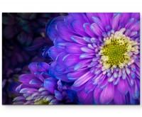 Violette Gerbera mit farbigen Akzenten - Leinwandbild