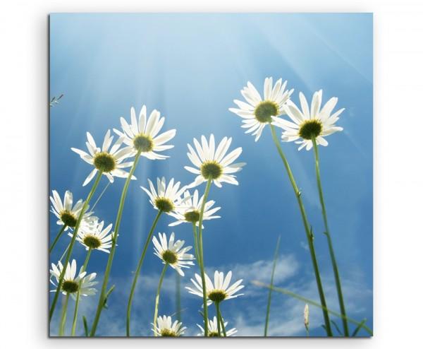 Naturfotografie – Gänseblümchen mit Himmel auf Leinwand