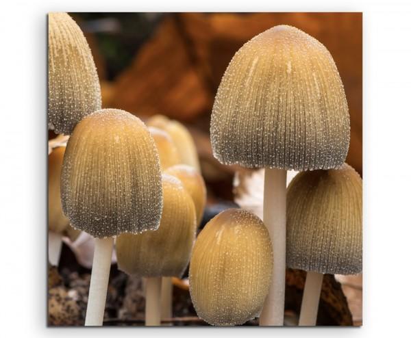 Naturfotografie – Gruppe von Pilzen auf Leinwand exklusives Wandbild moderne Fotografie für ihre Wan