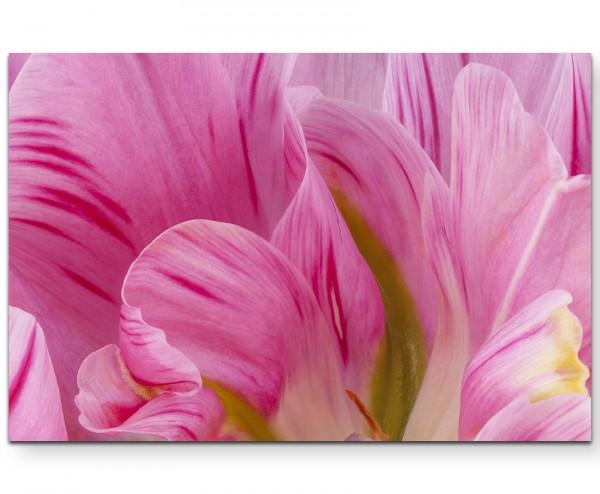 Rosa Tulpen im Sommer - Leinwandbild