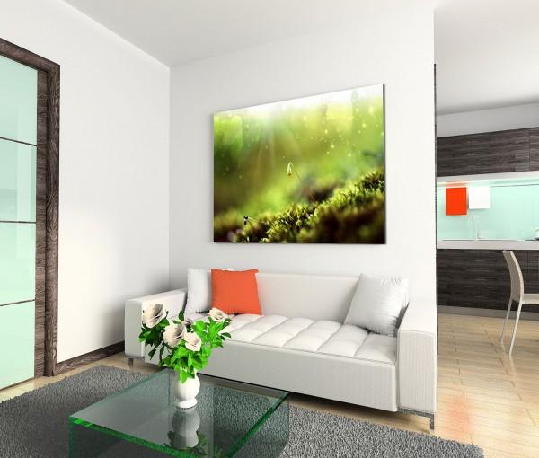 120x80cm Wandbild Waldboden Moos Sonnenstrahlen