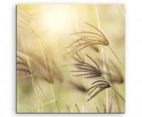 Naturfotografie – Grashalme im Wind auf Leinwand exklusives Wandbild moderne Fotografie für ihre Wan