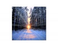 80x80cm Wald Winter Schnee Sonnenaufgang
