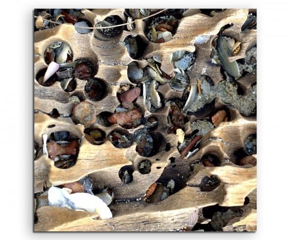 Naturfotografie – Holz und Muscheln am Strand auf Leinwand