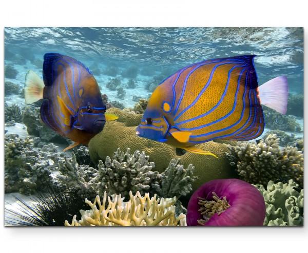 Korallenriff mit tropischen Fischen – Rotes Meer - Leinwandbild