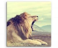 Tierfotografie – Wilder afrikanischer Löwe, Kenia auf Leinwand