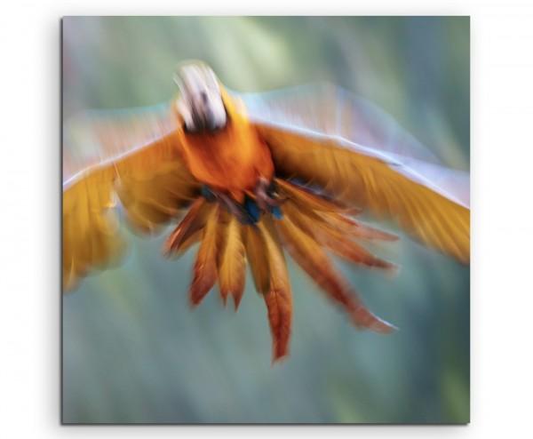 Künstlerische Fotografie – Papagei im Flug auf Leinwand