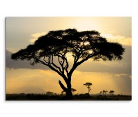 120x80cm Wandbild Afrika Akazie Baum Sonnenuntergang