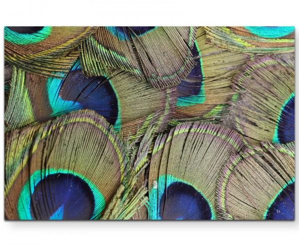 Pfauenfedern Nahaufnahme - Leinwandbild