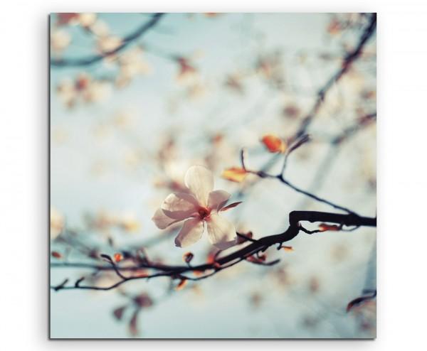 Naturfotografie – Kirschblüten vor blauem Himmel auf Leinwand
