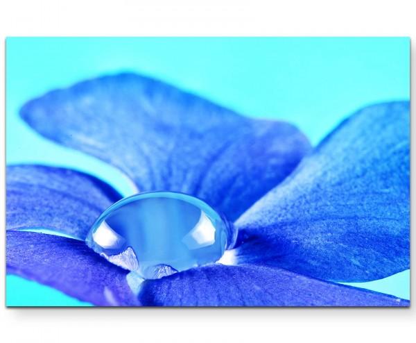 Fotografie – Immergrün Blüte mit Wassertropfen + türkisfarbener Hintergrund - Leinwandbild