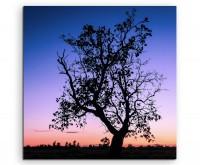 Landschaftsfotografie – Baum vor Abendhimmel, Thailand auf Leinwand