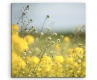 Landschaftsfotografie – Wiese mit gelben Blumen auf Leinwand exklusives Wandbild moderne Fotografie