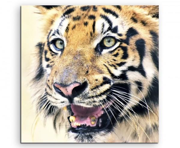 Tierfotografie – Bengalischer Königstiger auf Leinwand