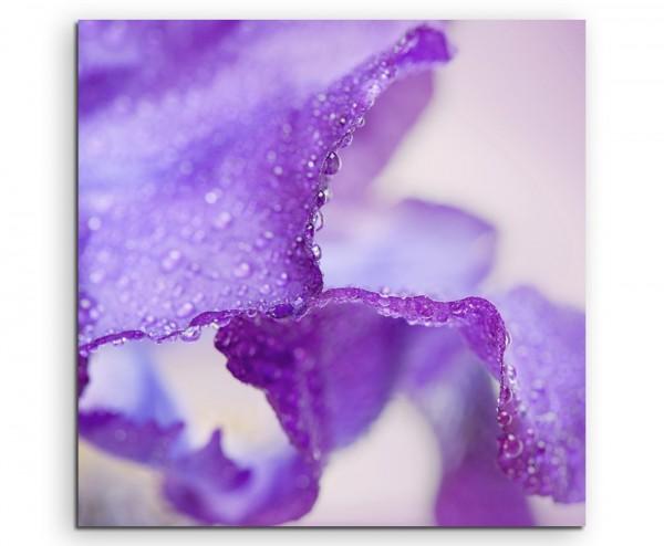 Naturfotografie – Lilafarbene Irisblumen auf Leinwand