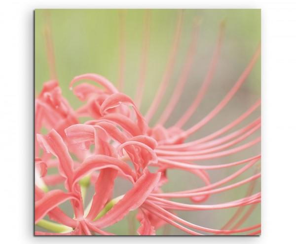 Naturfotografie – Rotes Amaryllisgewächs auf Leinwand exklusives Wandbild moderne Fotografie für ihr