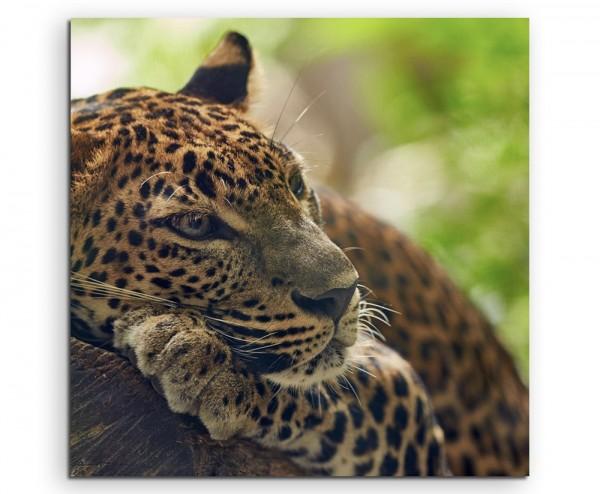 Tierfotografie – Jaguar auf Baum auf Leinwand